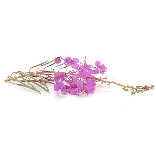 Canadian Willowherb Extract