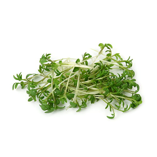 Garden Cress Sprout Extract