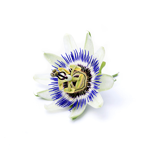 Passion Flower Seed Oil